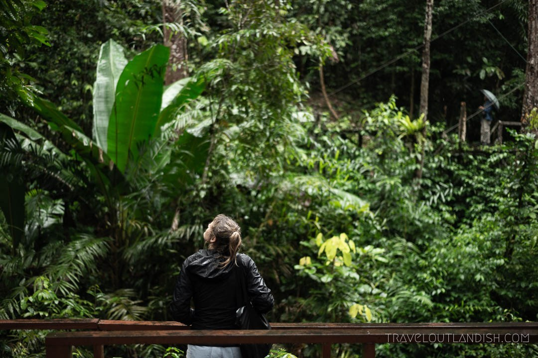 Travel Outlandish - Semenggoh Nature Reserve in Borneo